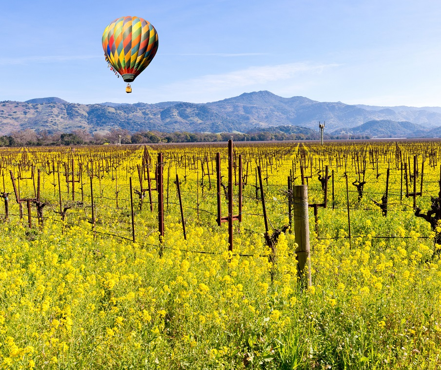 Hot Air Balloon in Napa Valley, Mustard Season
