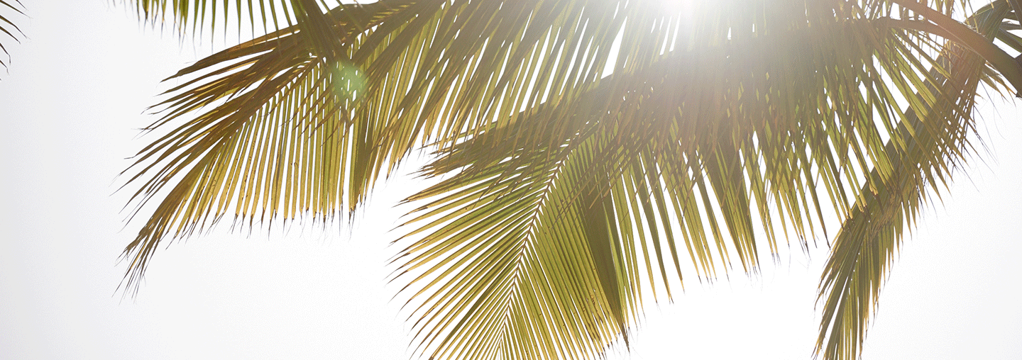 Palm Trees in Sunlight