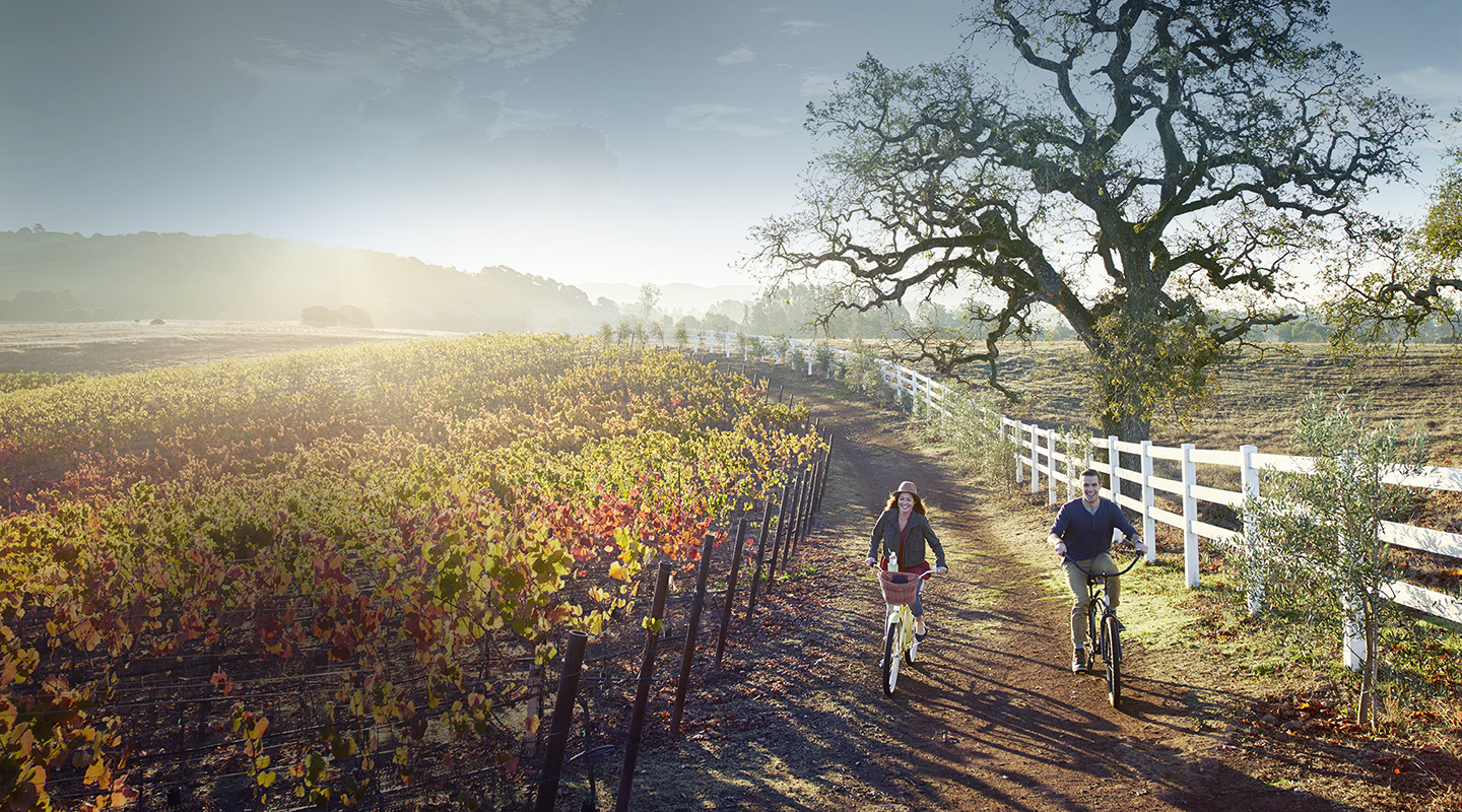 Couple riding bikes in vineyard